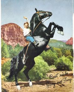 """TV Horse FURY - Fury was known as """"Highland Dale"""" where he lived on a farm in the town of Joplin in the state of Missouri of United States of America. Fury was only 18 months old when he was discovered by Ralph McCutcheon a trainer of animal motion picture stars."""