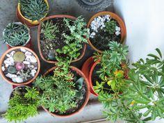 Cactus // Suculents // Cactaceae