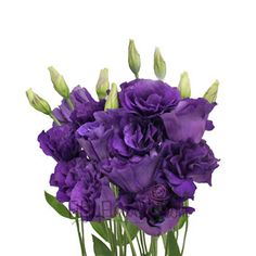 Get purple lisianthus at FiftyFlowers.com! This rich Lisianthus Purple Flower is abundant in petals, and is ideal for adding a textural element to your bouquets. Offered in quantities between 50 and 200 stems!