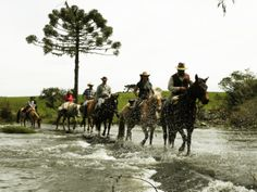 """""""The Troopers Way"""" in Southern Brazil - since the 18th Century, the pioneers drove cattle, horses and mules to Sao Paulo - Campofora Viagens a Cavalo: up to 10 day rides all around the year, even for lonely riders. ® Paulo Hafner"""