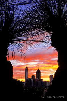 Perth & Grasstrees --- Photography by Andrew Davoll --- Perth /pɜrθ/ is the capital and largest city of the Australian state of Western Australia, Gorgeous !!