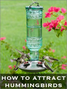 Want hummingbirds in your garden? Great tips and ideas! #hummingbirds