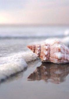 galveston fkk strand