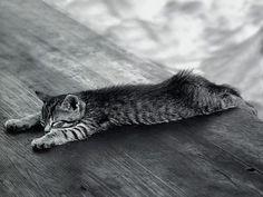 sleeping cat by veron