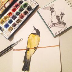 (Loc) Posted on May 29 2016 at 09:25PM: A male golden whilstler and some yet to be identified seed heads both from today's walk... #bird #watercolor #goldenwhistler #art #artwork #watercolour #myart #painting #paint #creative #birdsofaustralia #birdlovers #birdsofinstagram #birdpainting by kathryn_town