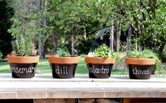 Martha Inspired Terracotta Herb Pots