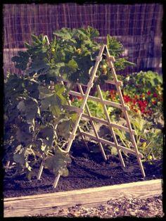 Contemporary Vertical Garden Ideas Spring Renewal