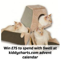 Advent Calendar #6: #Win £75 voucher to spend with Swell pet supplies