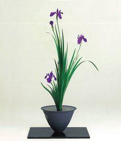 生花正風体 杜若一種生 Shoka-shofutai using Iris laevigata 生花正風體 燕子花一種生