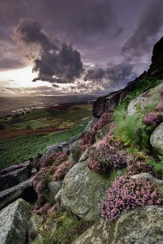 Heather & Stone walls & Yorkshire Blend Tea from Betty's Cafe in Harrogate. Coming Storm, South Yorkshire, England photo via enchanted