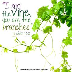 Bible scripture: I am the vine, you are the branches. John 15:5 Bible Scripture