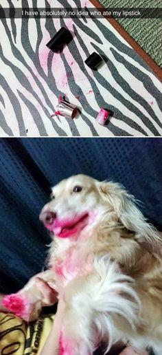 Smallest doggo dump. - Album on Imgur