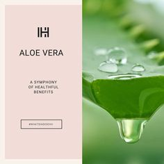 Tree Lily, Aloe Vera, Healing, Skin Care, Tableware, Glass, Egyptians, Instagram, Leaves