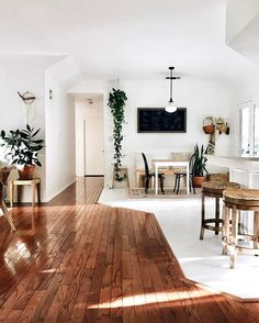 White walls, wood floors, green plants