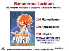 Beneficios del Ganoderma Lucidum en la Salud Ayurveda, Ecuador, Natural Health, Coffee, Healthy, Spirulina, Natural Foods, Cherry Tree, Vegetable Gardening