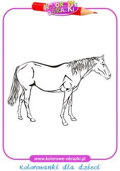 Koń - Kolorowanki zwierzęta