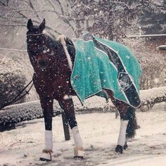 With snow falling in some areas on the eastern coast of Australia, you can keep your pony warm with a gorgeous selection of Eskadron Fleece Rugs available now at RIDERSxoxo