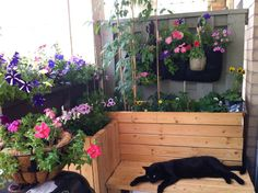 A balcony garden that even includes a jack cat!