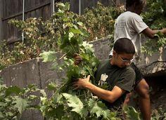 Revision Urban Farm   10 Urban Farming Projects Flourishing in Boston