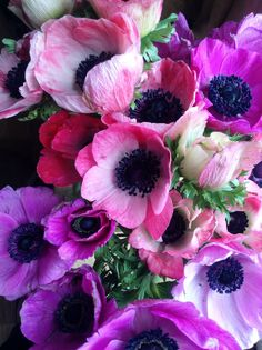 """~~Anemone :) THEY PROFUSELY FORGE UP-- DOWN IN MY PURPLE PETUNIA-PEONY PLOT, PLOWING THEIR WAY TO THE TOP OF THE PLOT AS IF TO SAY:  """"WELL, GOOD MORNING, YOU NICE PERSON………….ccp"""