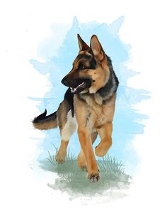 German Shepherd Trot by ~ShelleyVPhoto on deviantART
