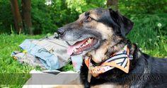 Reflektor-Hundetuch mit Blumenmuster. Bunt.