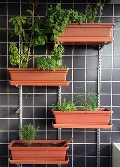 boa idéia!! horta para espaços pequenos!