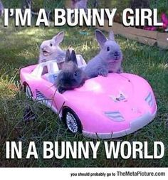 Funny pictures about Bunny Girl. Oh, and cool pics about Bunny Girl. Also, Bunny Girl photos. Funny Animal Jokes, Cute Funny Animals, Animal Memes, Funny Cute, Funny Memes, Funny Gifs, Cute Baby Bunnies, Funny Bunnies, Cute Animal Pictures