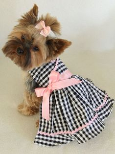 January 14 is National Dress Up Your Pet Day.
