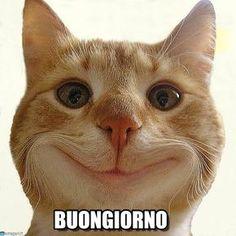 Risultati immagini per gatto che sorride