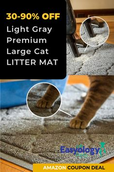 For Sale Munchkin Cats Code: 7328992280 Raising Kittens, First Time Cat Owner, Cat Litter Mat, Sleeping Kitten, Animal Quotes, Pet Quotes, Mama Cat, Cat Care Tips, Owning A Cat