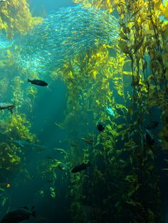 The Kelp Forest at Monterey Bay Aquarium Ocean Underwater, Underwater Photos, Underwater Photography, Nature Photography, Photography Women, Underwater Plants, White Photography, Underwater Wallpaper, Photography Gear