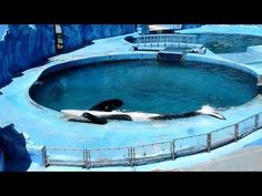 Please sign this petition and repin. This orca is suffering greatly!