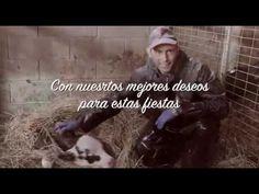 En este vídeo de felicitación se reconoce la labor de agricultores y ganaderos para que podamos celebrar las comidas y cenas de estas fechas con variedad de alimentos  ¡ FELIZ NAVIDAD !