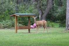 Deer feeder so we can get deer to hang out around our cabin. Deer Feeder Diy, Bird Feeders, Deer Hunting Tips, Hunting Gear, Deer Corn, Food Plots For Deer, Deer Mounts, Hunting Blinds, Turkey Hunting