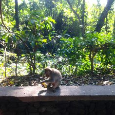 Was Sie auf Bali auf keinen Fall verpassen dürfen? Unsere Redaktion hat die besten Insider-Tipps für Sie zusammengestellt!