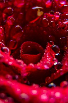 Free stock photo of nature, art, water, texture