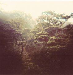 High altitude rainforest (Mt. Kinabalu) by Reuben Wu