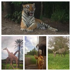 Africa in Mexico