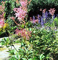 Præriemjødurt / Filipendula rubra:  Denne flotte planten kan bli hele 2 meter høy, med sterkt rosa blomster. Den er sjelden å se i norske hager. Den danner tette grupper, formerer seg med rotutløpere, og er generelt en svært robust og villig plante.