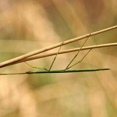 8 animales que se camuflan en la naturaleza