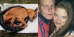 Belgian couple starves pregnant dog to the point of no return! RIP Shana! | YouSignAnimals.org