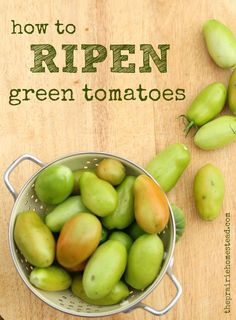 If youre in a panic over saving your lovely green tomatoes before a frost, this post is for you! Im a no-nonsense person, so I dont fuss over my ripening method, but it still works. Or, if you are drowning in green tomatoes and dont have time to ripen them, turn them into a variety of green tomato delicacies (recipes included)