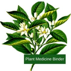 This amazing digital Plant Medicine Binder is 160 pages of information about various plants that have been used as medicine for centuries. It shares information about each plant, the benefits it contains, some great recipes and pages for notes. Many plants are not only great as herbs, but are also essential oils so you may recognize some of them and with others you'll find a whole new world of opportunity!