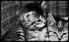 Fluffi & Fiffi our beautiful kittens
