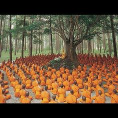 Buddhist monks gather around tree