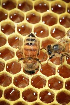Cera d'api, miele, propoli, sono le materie prime prodotte dalle api con le quali si è lavorato per progettare una collezione di oggetti di design.