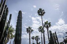 Skycrappers, cactus et palmiers au Jardin de Majorelle à Marrakech, photo prise au Leica M9  www.camillegabarra.com #landscape #photographe #since1974