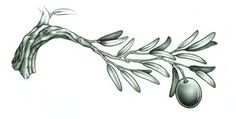 olive branch tattoo - Google Search