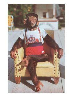 Happy birthday, dressed chimpanzee in the armchair-Alles Gute zum Geburtstag, gekleideter Schimpanse im Sessel Kunstdruck Happy birthday, chimpanzee dressed in armchair art print - Birthday Images Funny, Birthday Quotes For Him, Happy Birthday Messages, Birthday Greetings, Newborn Baby Photography, 21st Birthday, Birthday Memes, Sister Birthday, Birthday Ideas